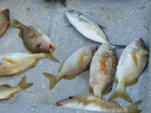 pêche du jour!