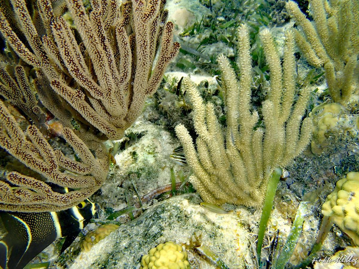 Jardin de corail, Santa Catalina, Providencia @pink.turtle.blog