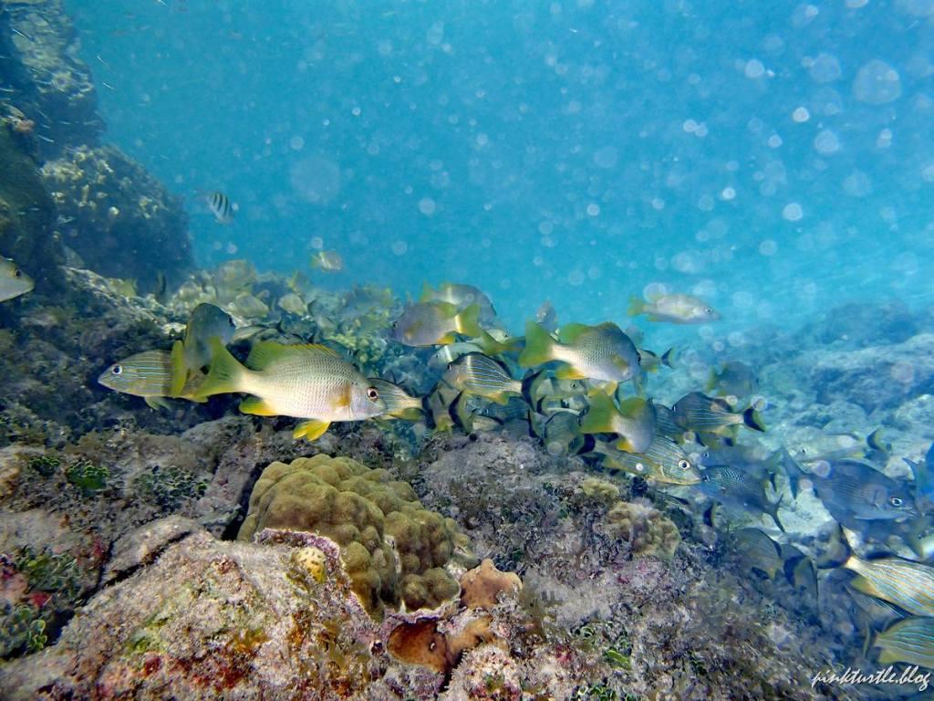 Grotte de Morgan, Providencia @pink.turtle.blog