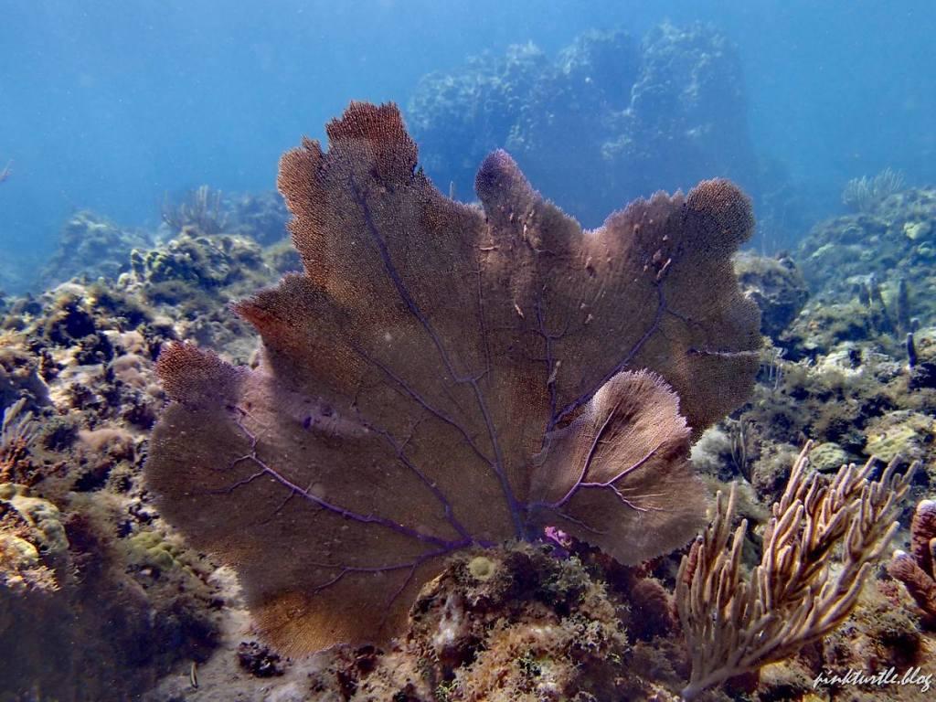 Cabeza de Morgan, Providencia @pink.turtle.blog