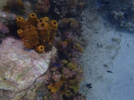 Anses d'Arlet snorkeling 1