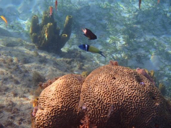 Anses d'Arlet snorkeling 3