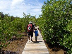 Mangrove Caravelle