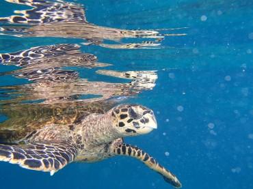 Tortue de Félicité, Seychelles @pink.turtle.blog