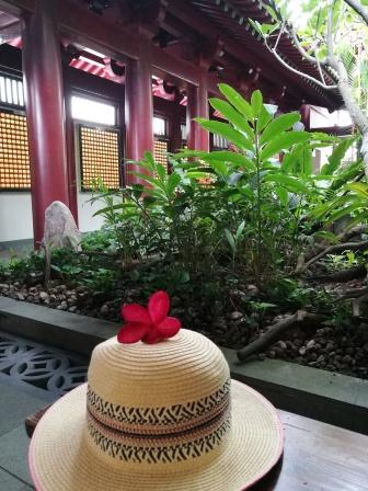 @pink.turtle.blog/fleur de frangipanier (temple de la relique de la dent de bouddha)