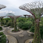 Gardens by the bay, supertrees