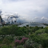@pink.turtle.blog/ Flower Dome (Singapour)