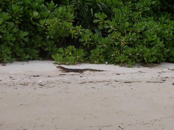 Varan, Teluk Keke