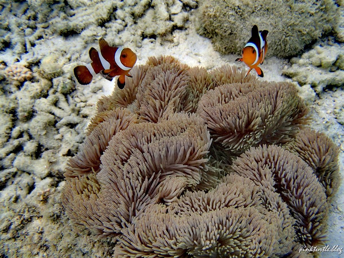 Snorkeling, Teluk keke @pinkturtle.blog