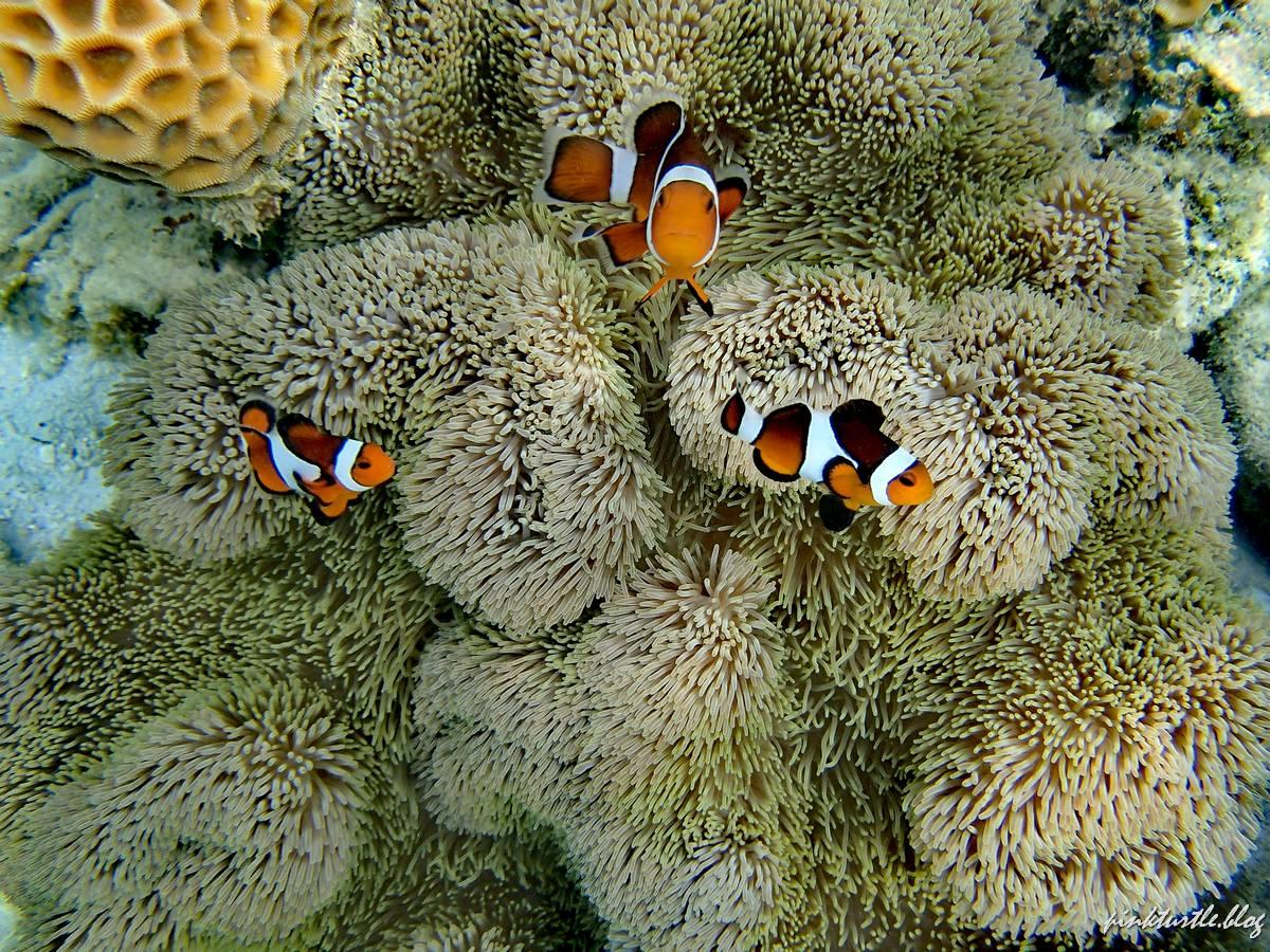 Snorkeling, Teluk Keke, Perhentian @pinkturtle.blog