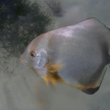 snorkeling Anse source d'argent