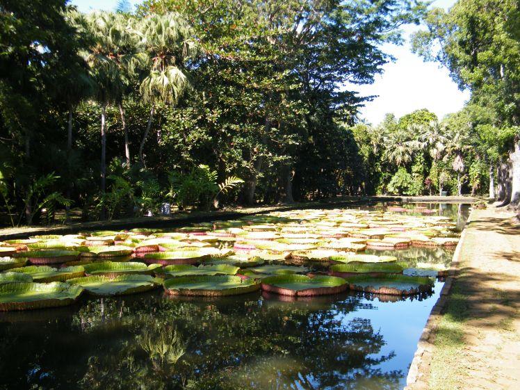 jardin des pamplemousses