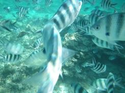 Snorkeling Montchoisy