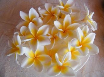 @pink.turtle.blog/ Fleurs de frangipaniers (Bienvenue à la Réunion!)