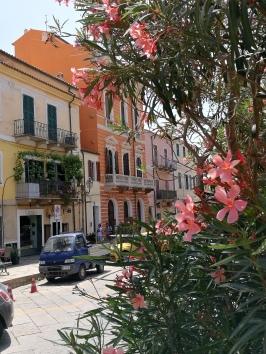 @pink.turtle.blog/ ruelles de la Maddalena