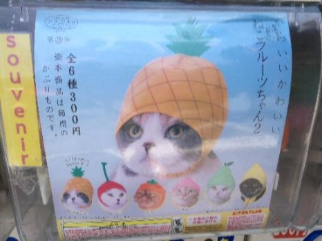 Bonnets pour chats / pink.turtle.blog