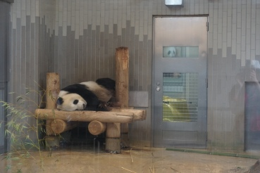 Zoo d'Ueno/ @pink.turtle.blog