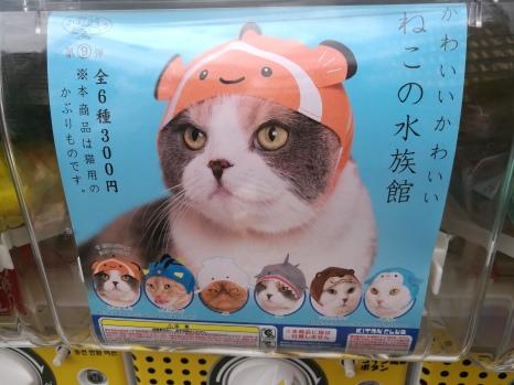 Bonnets pour chats/ pink.turtle.blog