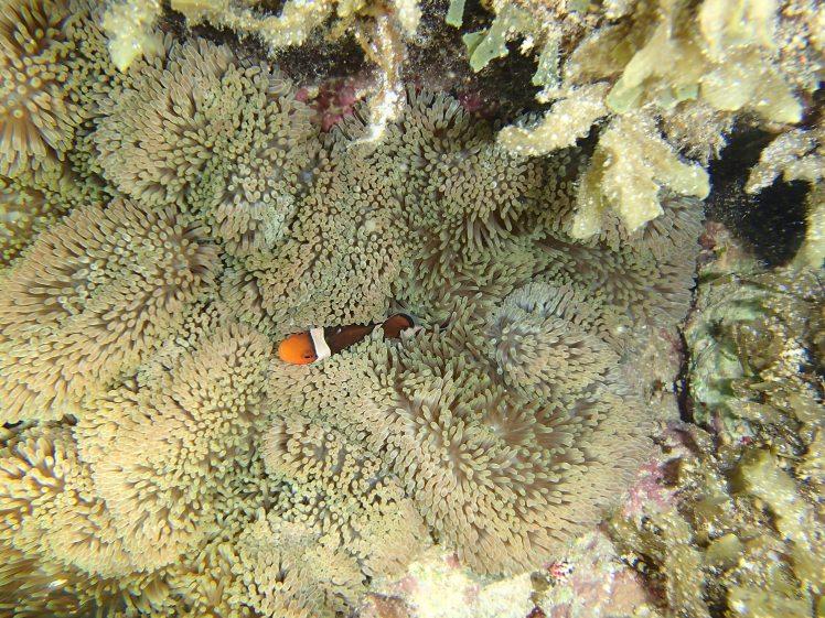 Snorkeling Yonehara/ @pink.turtle.blog