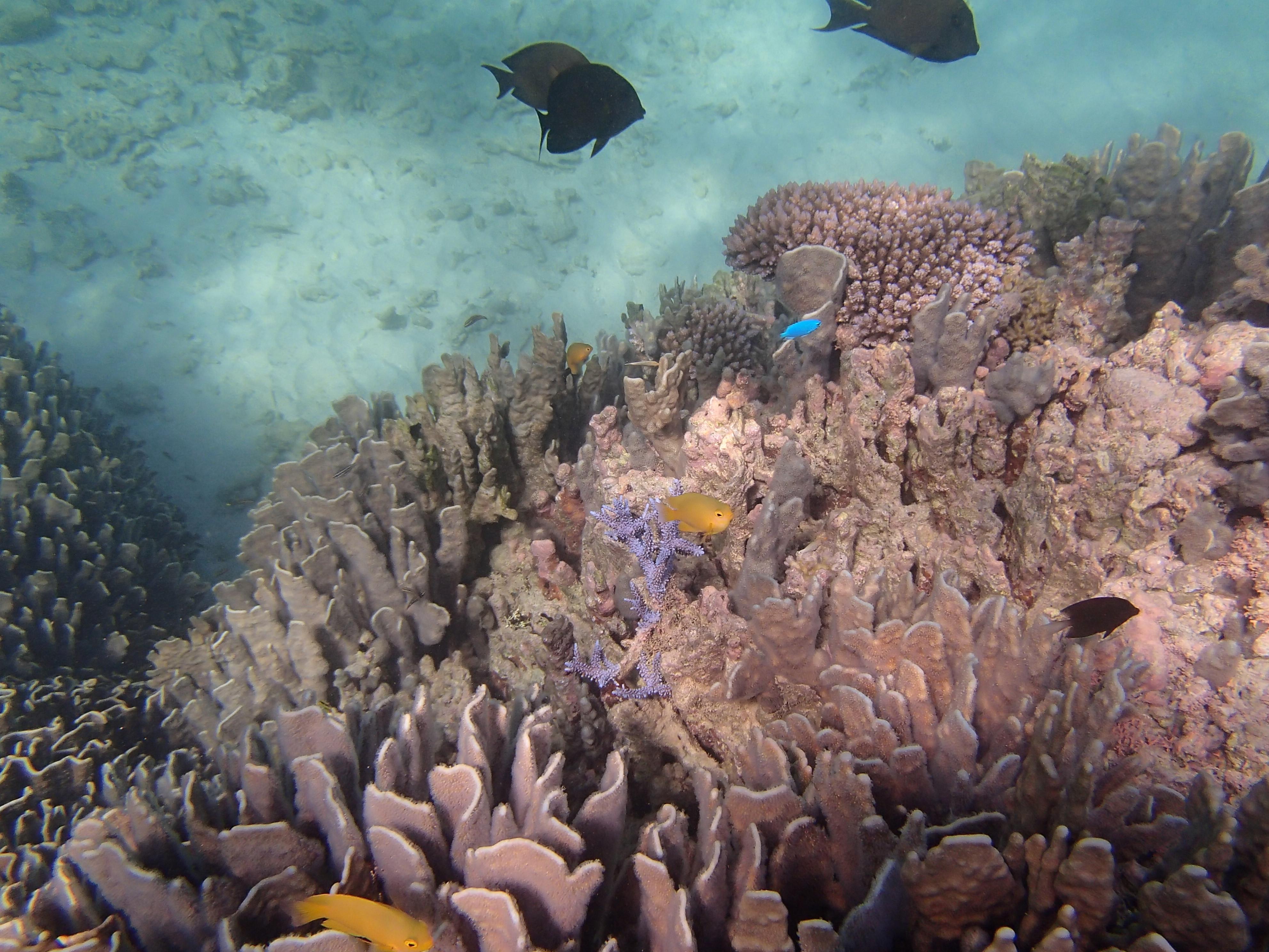 Snorkeling tour Maezato/ @pink.turtle.blog