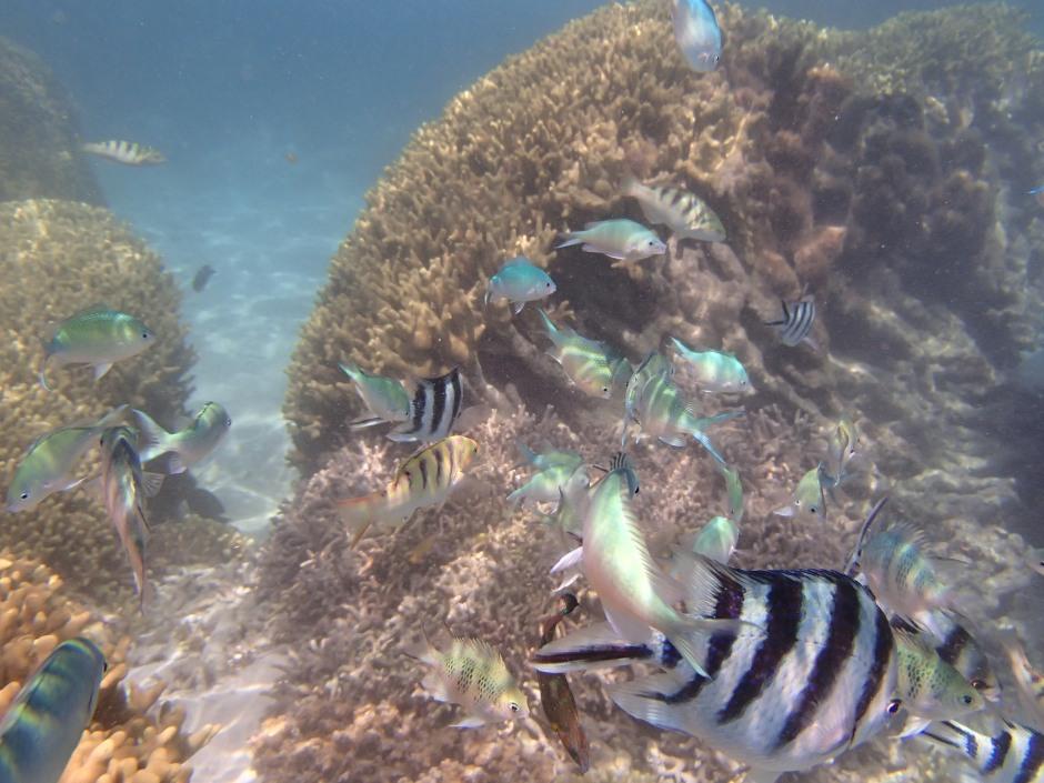 Snorkeling tour/ @pink.turtle.blog