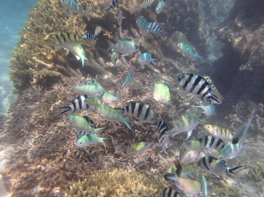Snorkeling Shiraho/ @pink.turtle.blog