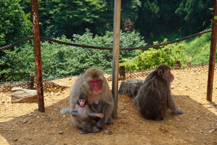 Mont Iwata, Arashiyama/ @pink.turtle.blog