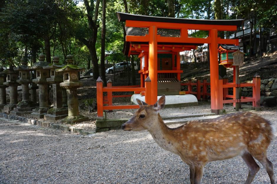 Nara et ses daims en liberté/@pink.turtle.blog