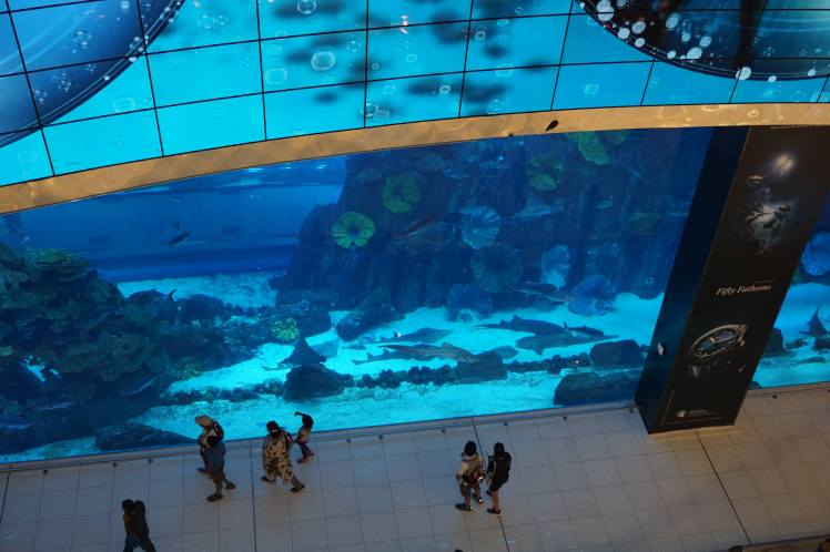 Aquarium de Dubaï Mall/ @pink.turtle.blog