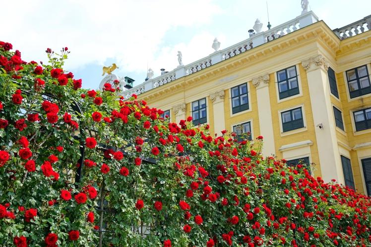 Roseraie, Château de Schönbrunn, Vienne @pink.turtle.blog