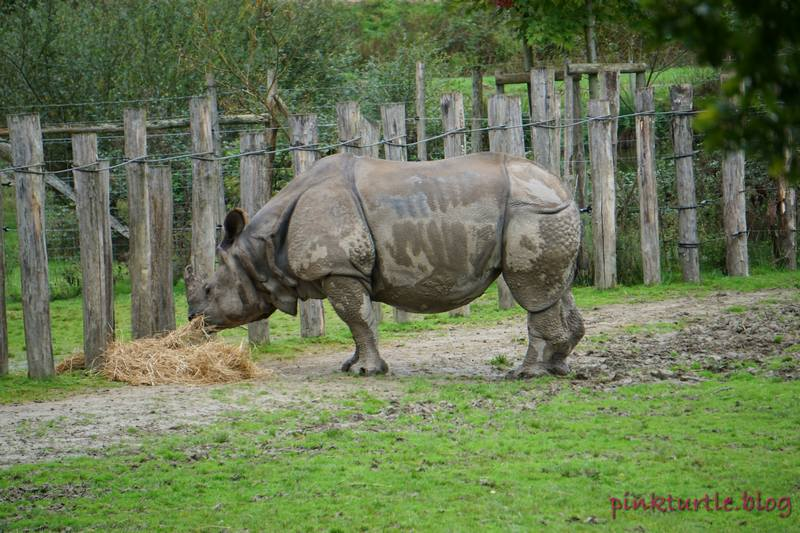 Rhinocéros, Branféré @pink.turtle.blog