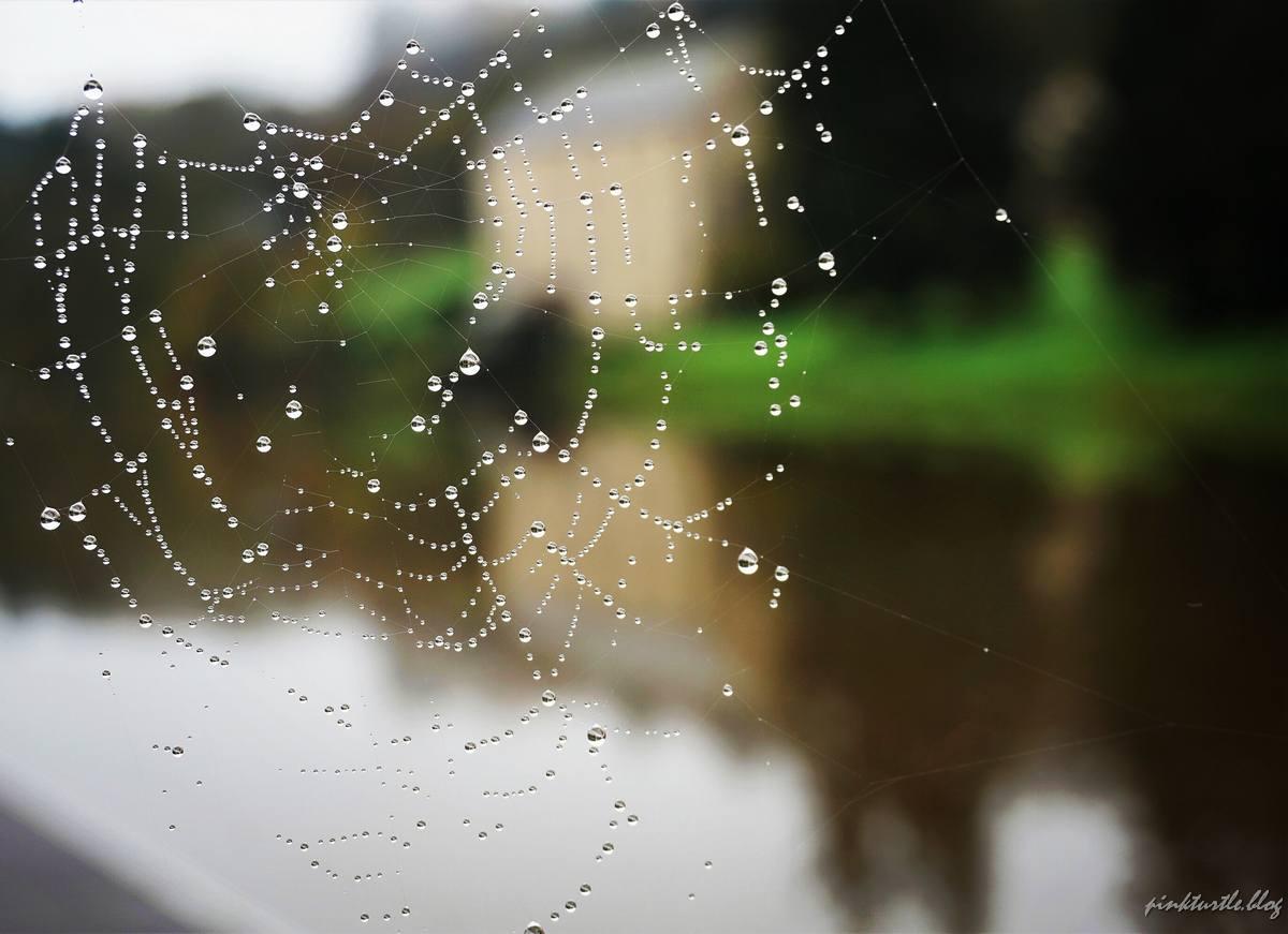 Toile d'araignée devant l'Oust @pink.turtle.blog