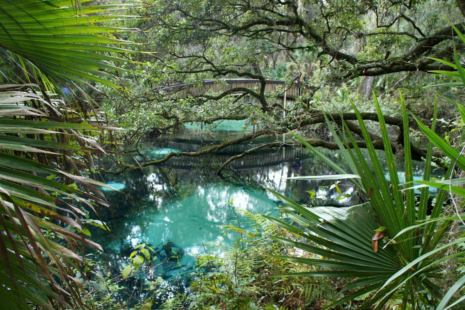 Forêt d'Ocala @Le Blog de Clara Circus