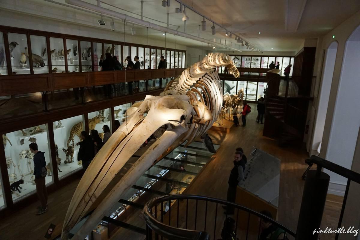 Musée d'Histoire Naturelle de Nantes @pink.turtle.blog