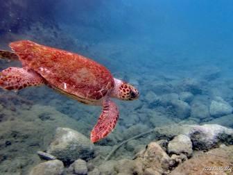 Tortue de Limeni, Grèce @pink.turtle.blog