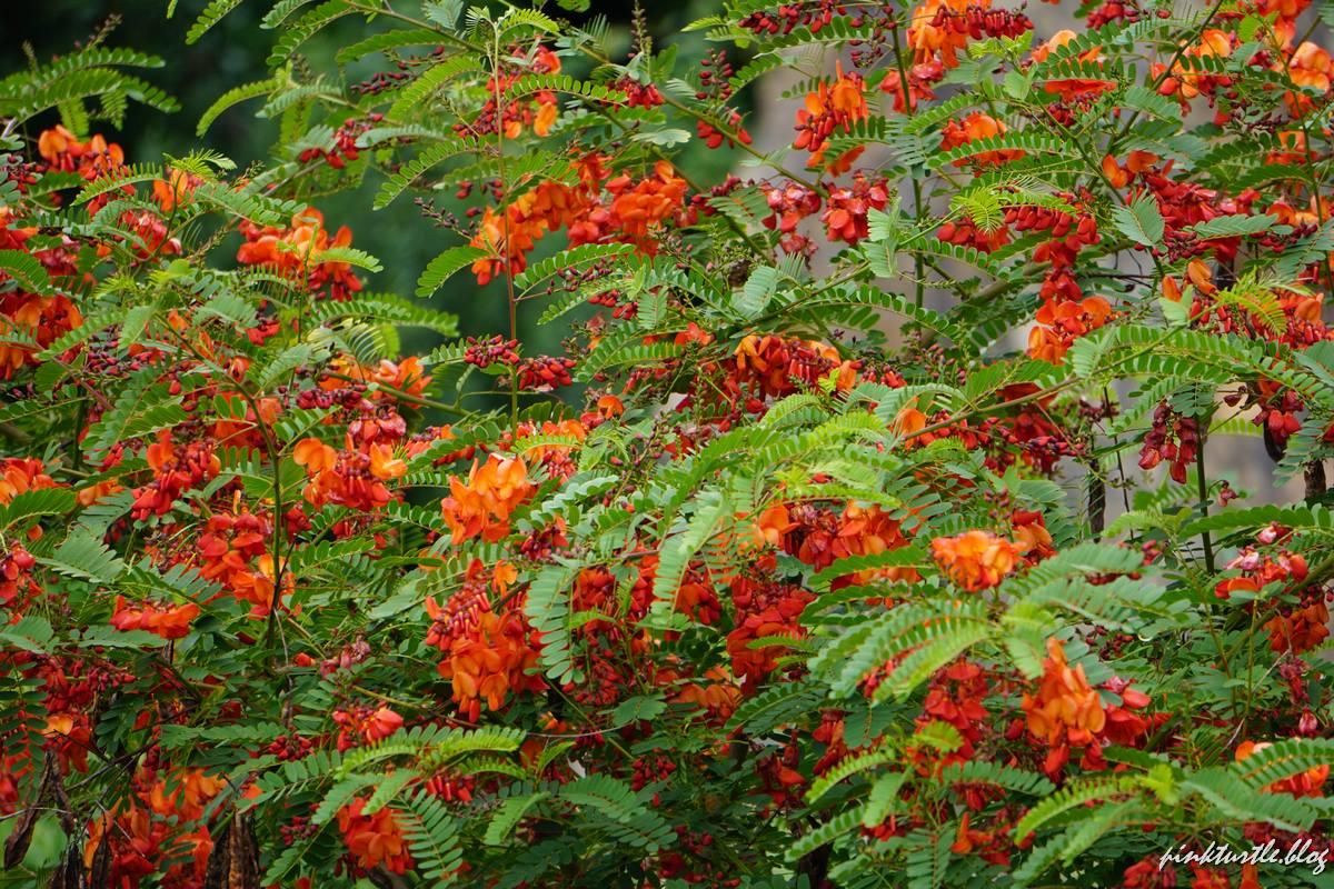 Plantes du jardin extraordinaire @pinkturtle.blog