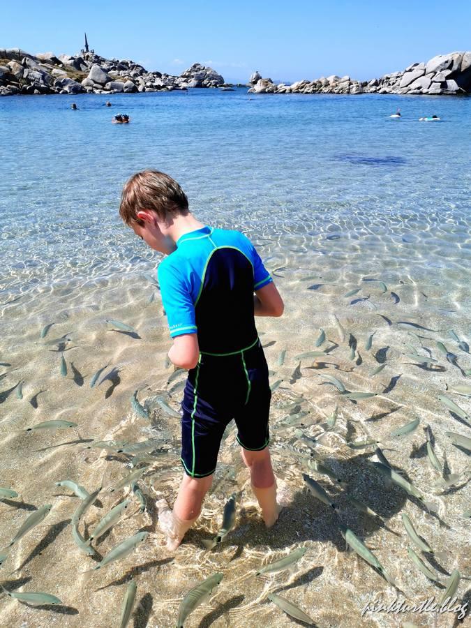 Les îles Lavezzi @pinkturtle.blog