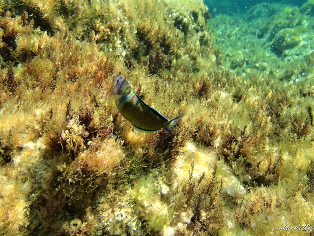 Snorkeling, îles Lavezzi @pinkturtle.blog