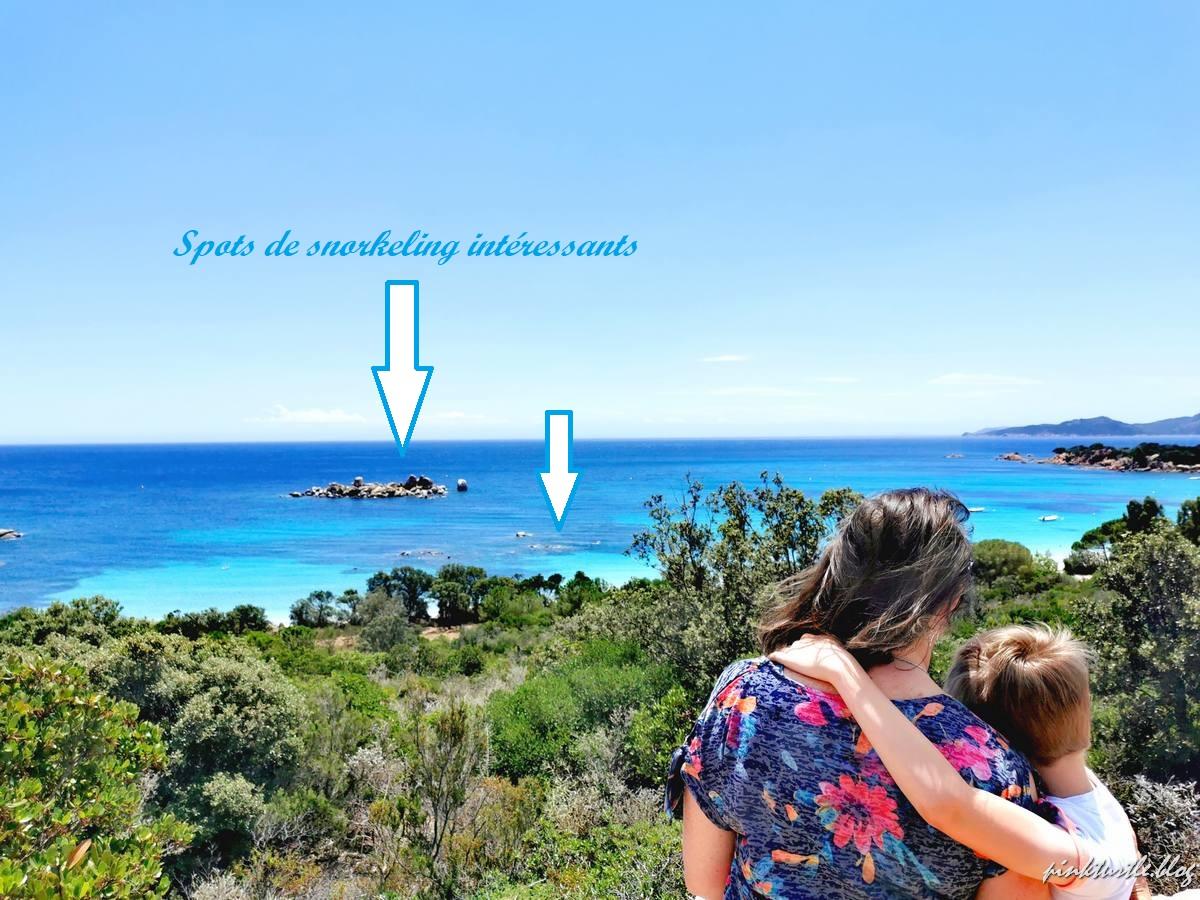 Spots de snorkeling, Palombaggia @pinkturtle.blog
